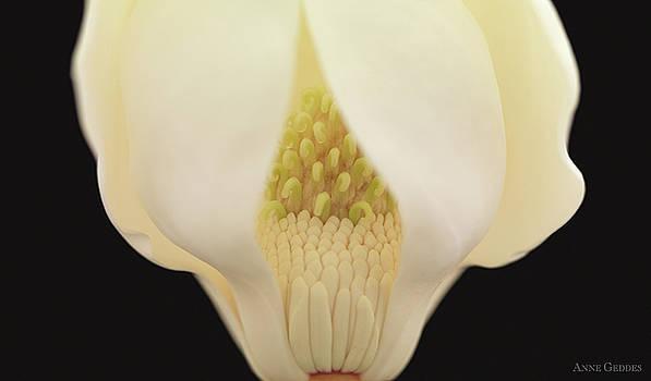 Untitled by Anne Geddes