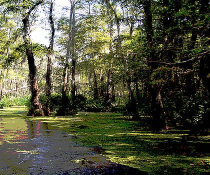 111215F Louisiana Swamp by Garland Oldham