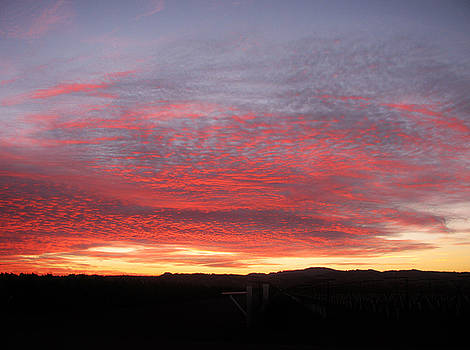 11515 Sunset by Carol Welsh