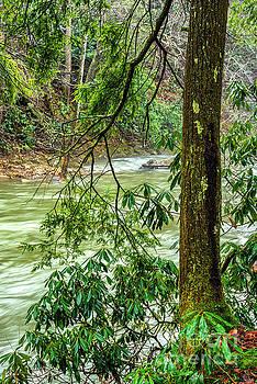 Back Fork of Elk River by Thomas R Fletcher