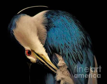 Paulette Thomas - Black Crowned Night Heron