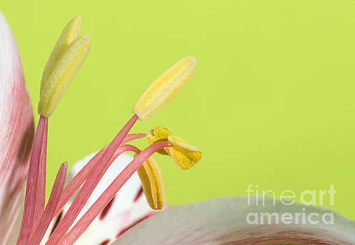 Flower blossom by Deyan Georgiev