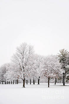Winter Wonderland by Birgit Tyrrell