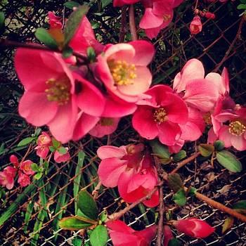 Instagram Photo by Melanie Conway