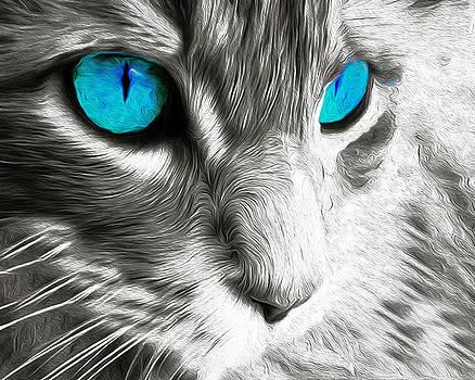 14, Cat by Nixo by Nicholas Nixo