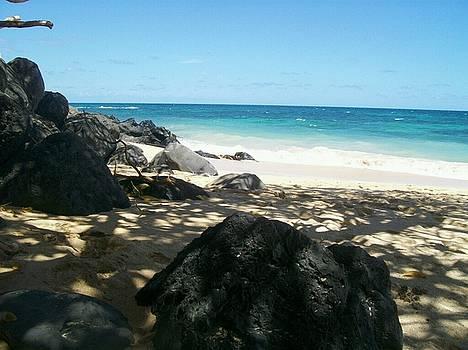 Hawaii by Sonya Wilson