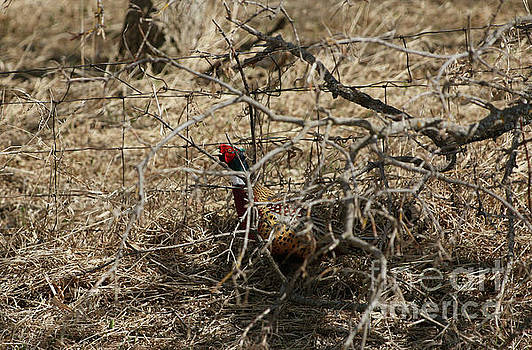 Hiding in the trees by Lori Tordsen