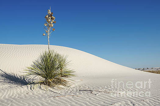 Jamie Pham - The unique and beautiful White Sands National Monument in New Mexico.