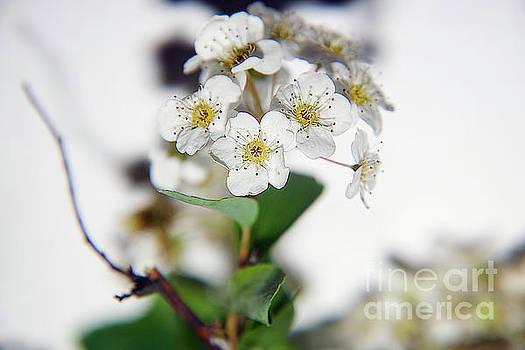 Spring Flowers by Elvira Ladocki