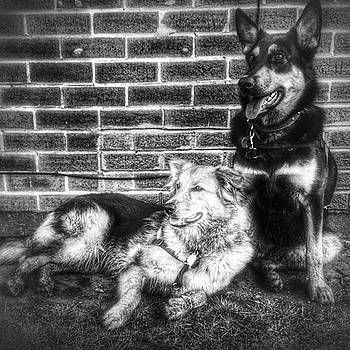 #dogs #petstagram #gsd #germanshepherd by Isabella Shores