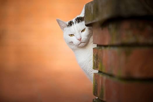 Cat by Dorothy Binder