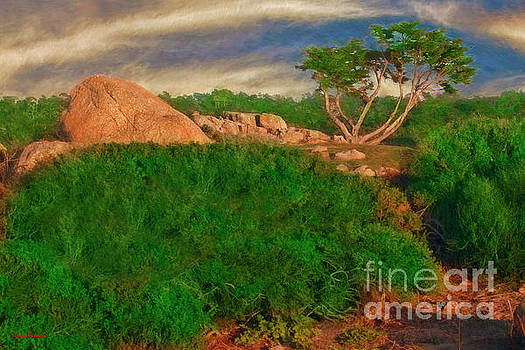 17 Mile Drive Boulder And Tree by Blake Richards