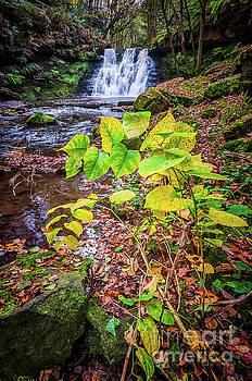 Mariusz Talarek - Goit Stock Waterfall