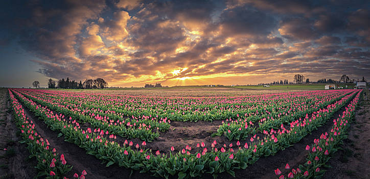 180 Degree View Of Sunrise Over Tulip Field by William Freebillyphotography