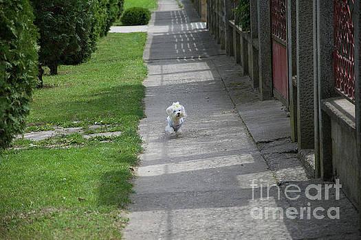 My Small Dog by Elvira Ladocki
