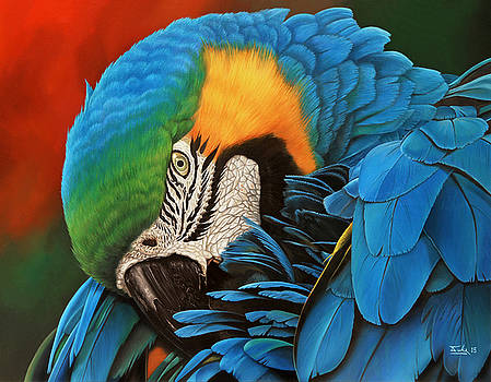 1st Place Nature Art Exhibition - Preening by John Duke