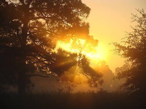 1.Sunrise by Ramona Barnhill
