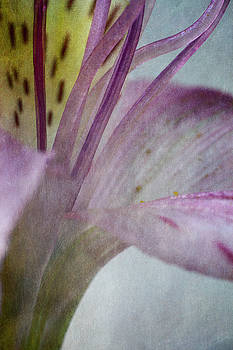 Abstract Pastel Alstroemeria by Bernice Williams