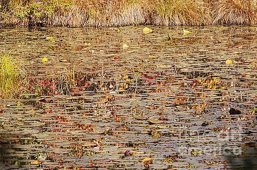 Bob Phillips - Abstract Reflection