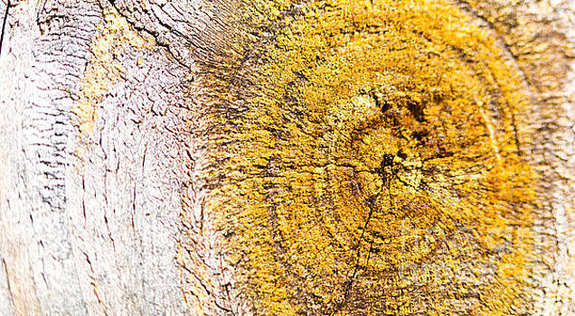 Abstract Wood Panel Knot by ELITE IMAGE photography By Chad McDermott