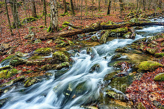 Aldrich Branch Monongahela National Forest by Thomas R Fletcher