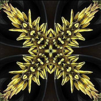Aloe vera flowers by Jesus Nicolas Castanon