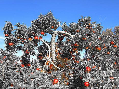 Apples  by Raymond Earley