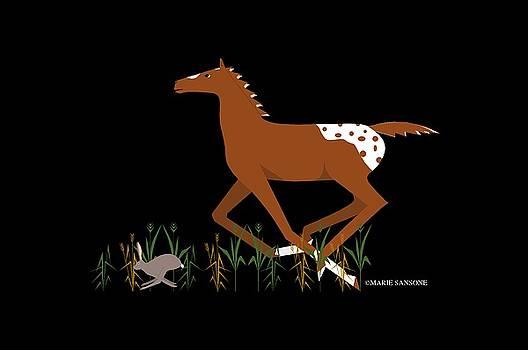 Appy Foal by Marie Sansone
