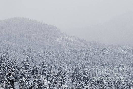 Steve Krull - April Snowstorm in the Pike National Forest of Colorado
