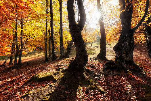 Autumn colors forest at sunny day by Nickolay Khoroshkov