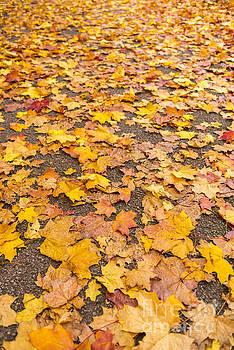 Svetlana Sewell - Autumn Leaves