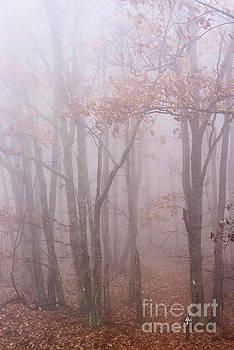 Autumn Mist Appalachian Trail by Thomas R Fletcher