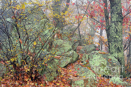 Autumn Mist Blue Ridge Parkway by Thomas R Fletcher