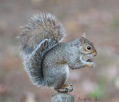 Autumn Squirrel by Diane Giurco