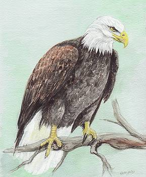 Bald Eagle by Morgan Fitzsimons