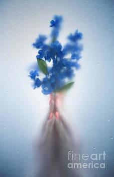Svetlana Sewell - Blue Dream