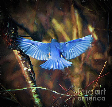 Bluebird Wings by Kerri Farley