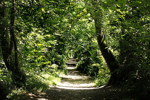 Bockhampton Path by Mike Finding