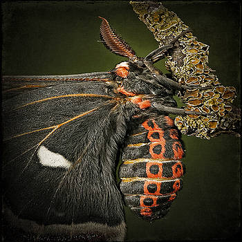 Ingrid Smith-Johnsen - butterfly 1