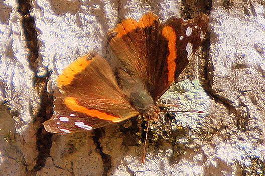 Butterfly  by Billie Earley
