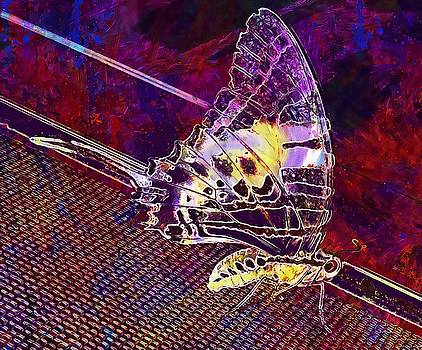 Butterfly Insect Close  by PixBreak Art