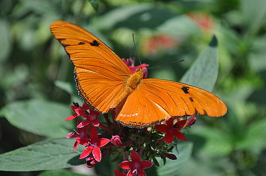 Butterfly by Larry Holt