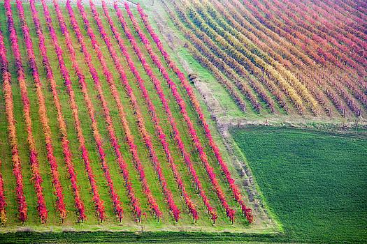 Francesco Riccardo Iacomino - Castelvetro di Modena, vineyards in Autumn