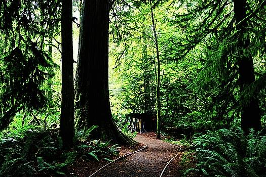 Cathedral Grove by Brian Sereda