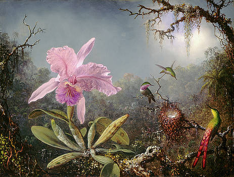 Martin Johnson Heade - Cattleya Orchid and Three Hummingbirds