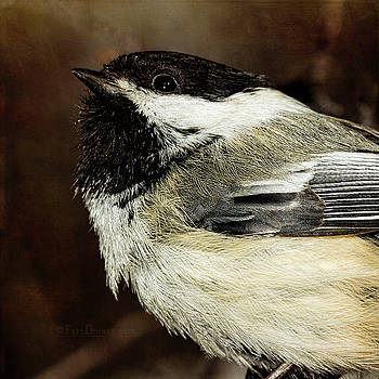 Chickadee by Fred Denner