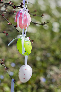 Newnow Photography By Vera Cepic - Colorful Easter eggs hanging on branches outdoors with white flo