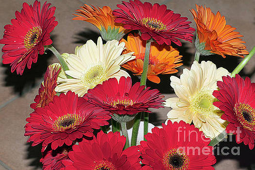 Colorful Gerberas by Elvira Ladocki