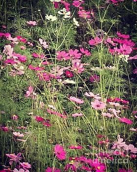 Cosmos flowers  by Sobajan Tellfortunes