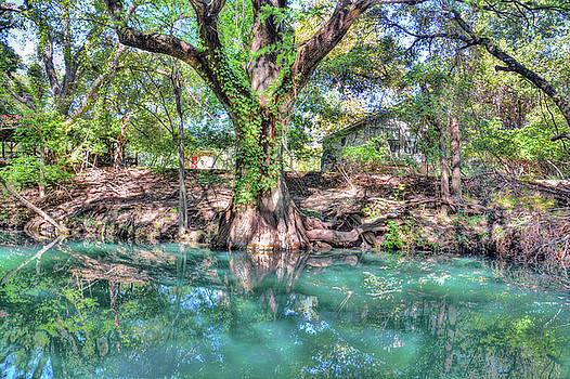 Cypress Creek by Savannah Gibbs